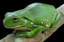 Kolika asi žábám zachránil život Erivan Haub, který o ekologii pouze nemluvil, ale prováděl něco pro zvířata a přírodu v praxi.